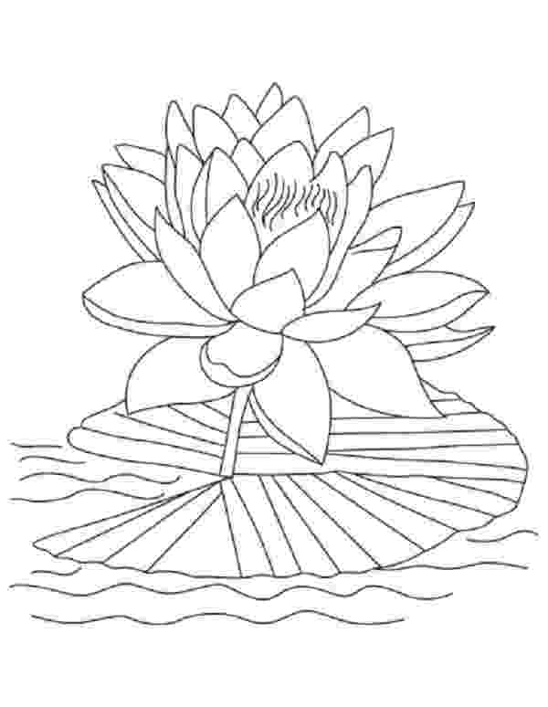 lotus flower coloring pages flowers letmecolor pages flower lotus coloring
