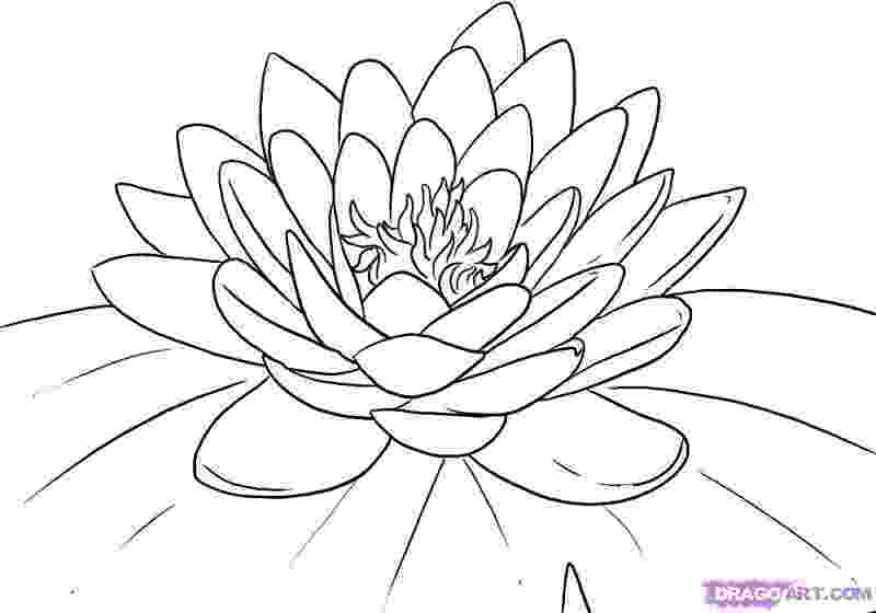 lotus flower coloring pages free printable lotus coloring pages for kids coloring lotus flower pages