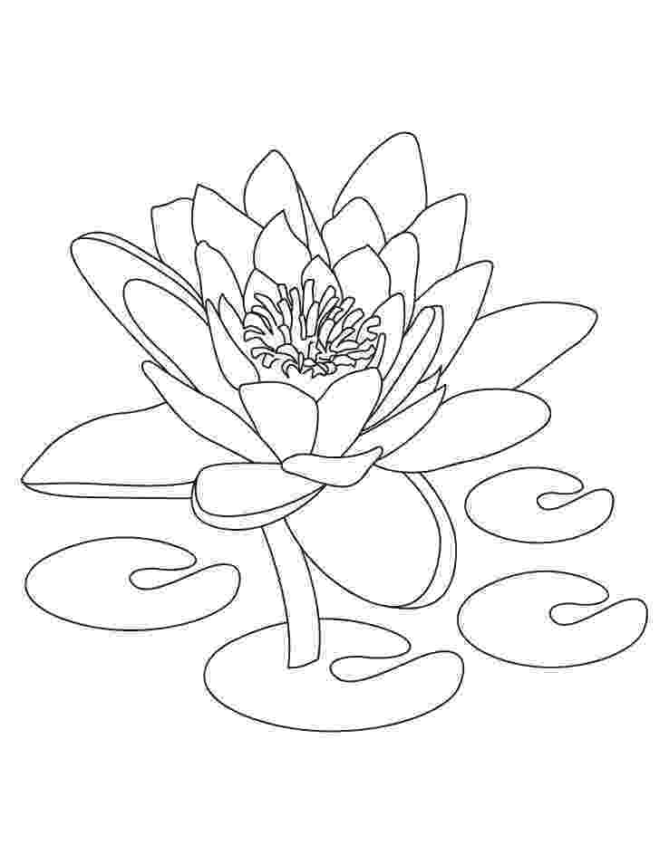 lotus flower coloring pages free printable lotus coloring pages for kids coloring lotus pages flower