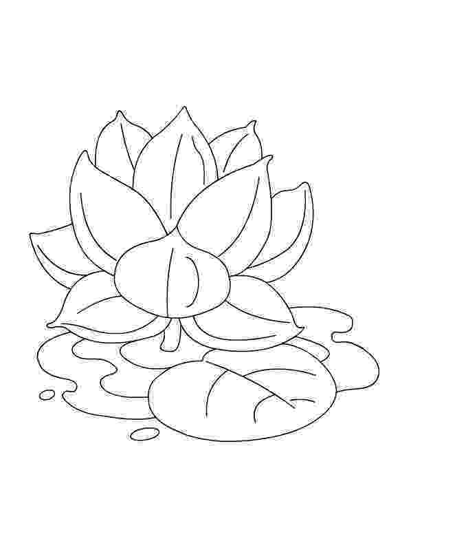lotus flower coloring pages free printable lotus coloring pages for kids coloring pages flower lotus