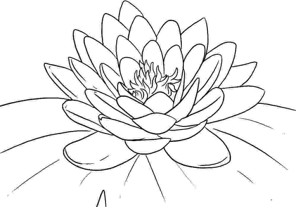 lotus flower coloring pages free printable lotus coloring pages for kids flower pages coloring lotus