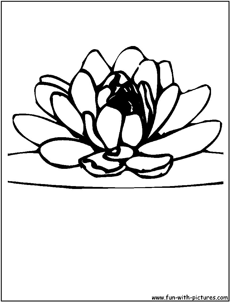 lotus flower coloring pages free printable lotus coloring pages for kids flower pages lotus coloring