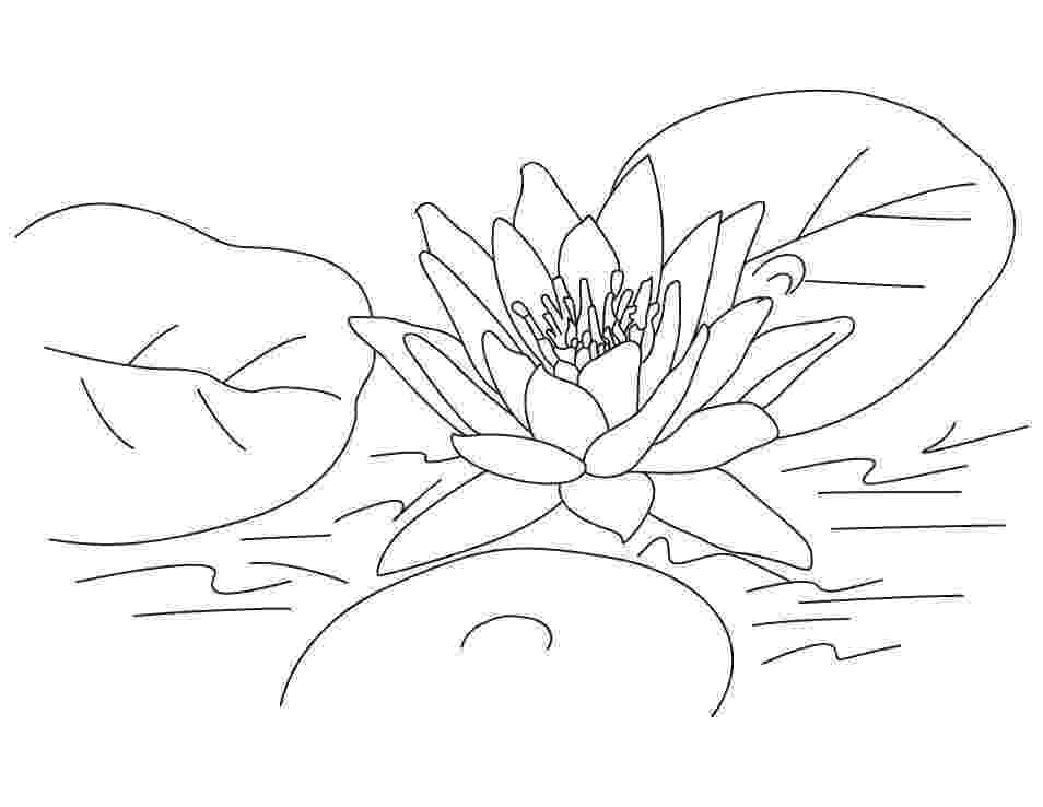 lotus flower coloring pages free printable lotus coloring pages for kids lotus flower pages coloring 1 1
