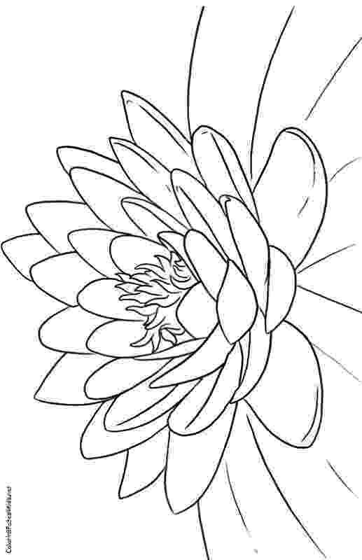 lotus flower coloring pages free printable lotus coloring pages for kids pages flower lotus coloring