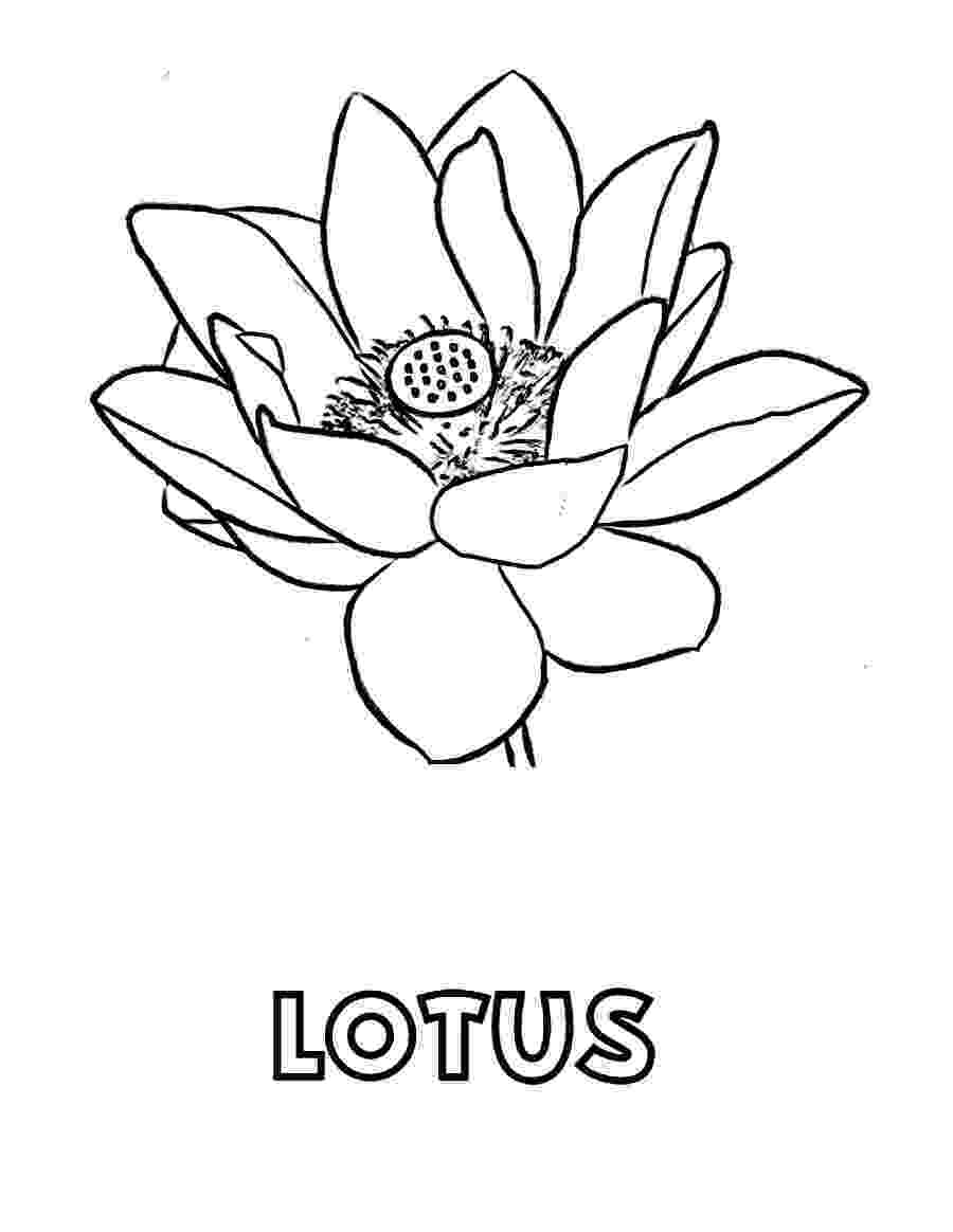 lotus flower coloring pages free printable lotus coloring pages for kids pages lotus flower coloring