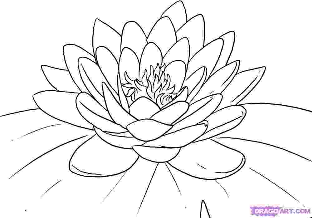 lotus flower coloring pages lotus flower coloring pages flower pages coloring lotus