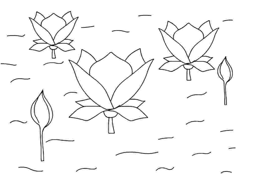 lotus flower coloring pages may 2013 flower coloring page lotus coloring flower pages