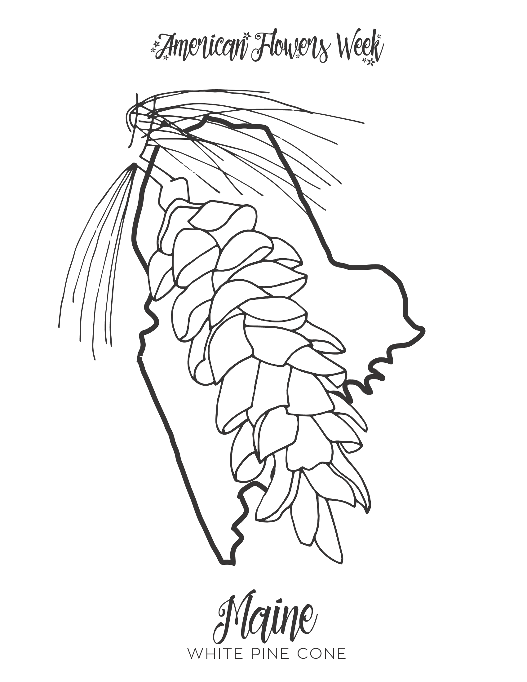 maine state flower 50 state flowers free coloring pages american flowers week flower state maine