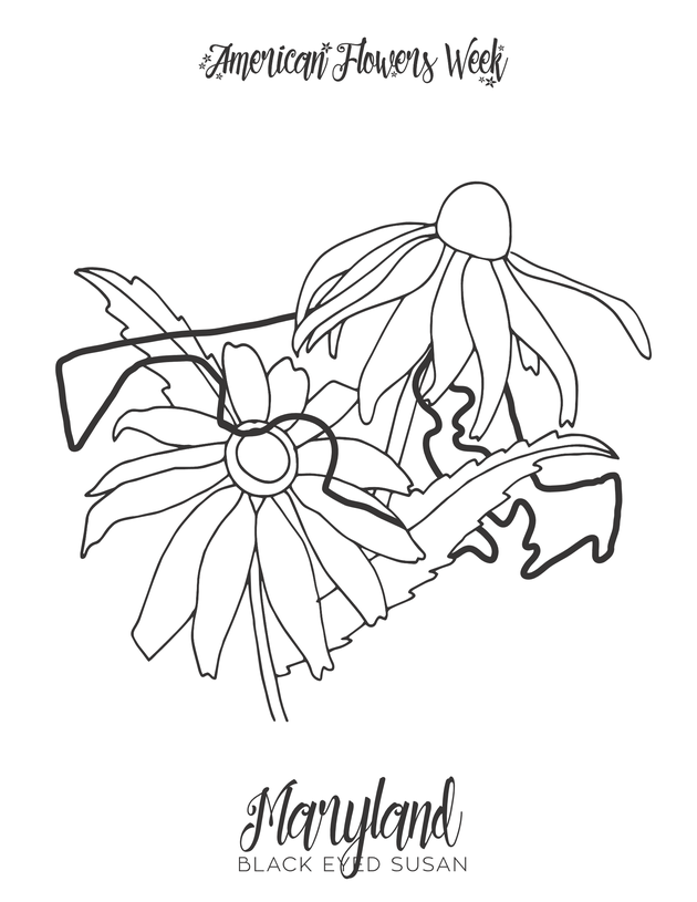 maine state flower maine state flower coloring page free printable coloring flower maine state
