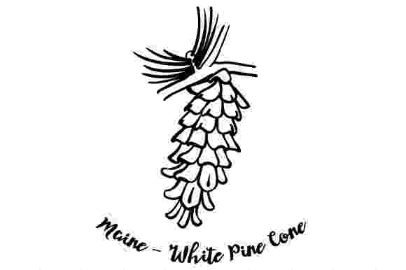 maine state flower maine state flower coloring page woo jr kids activities state maine flower