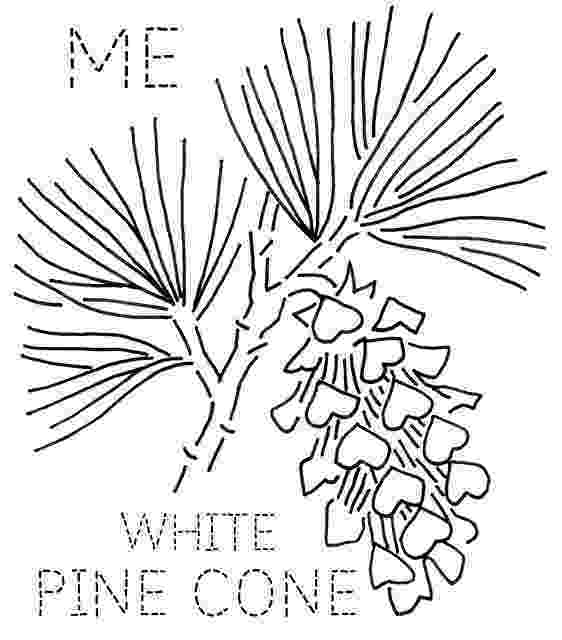 maine state flower maine white pine cone embroidery state flower maine flower state