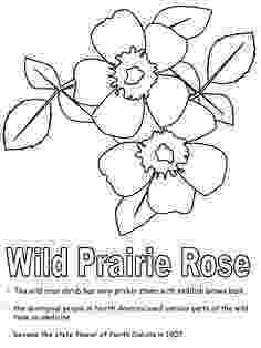 maine state flower state flag of maine coloring page color luna state maine flower