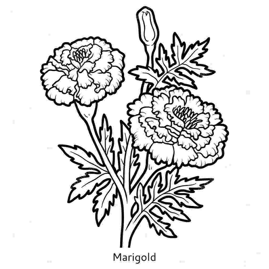 marigold coloring page coloring book flower marigold stock vector ksenya marigold page coloring