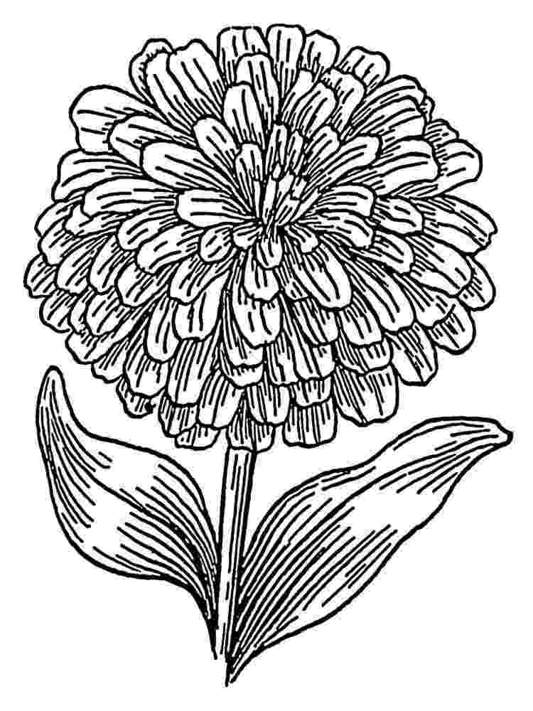 marigold coloring page famous marigold flower colouring pages picolour page marigold coloring