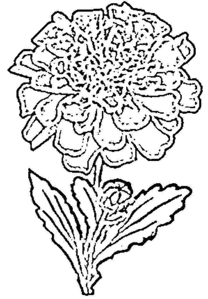 marigold coloring page marigold flower coloring page tagetes coloring coloring marigold page