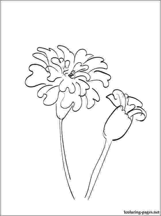 marigold coloring page marigold flower coloring pages download and print coloring marigold page
