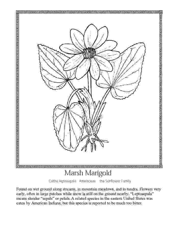 marigold coloring page pot marigold coloring page coloringcrewcom coloring page marigold