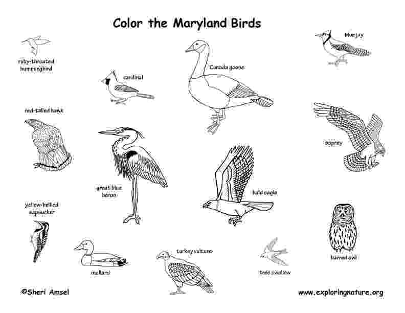maryland coloring pages maryland facts for children a to z kids stuff pages coloring maryland