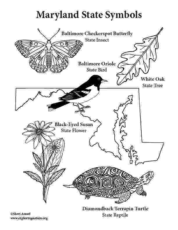 maryland coloring pages usa printables state outline shape and demographic map coloring pages maryland