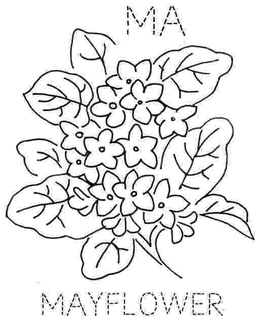 massachusetts state flower mayflower coloring page massachusetts flower state
