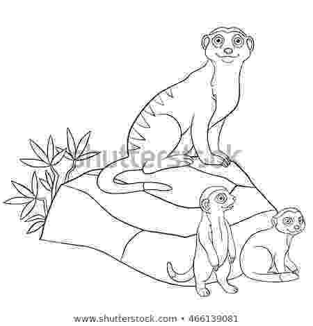 meerkat pictures to colour mmeerkat coloring printables coloring pages colour pictures meerkat to
