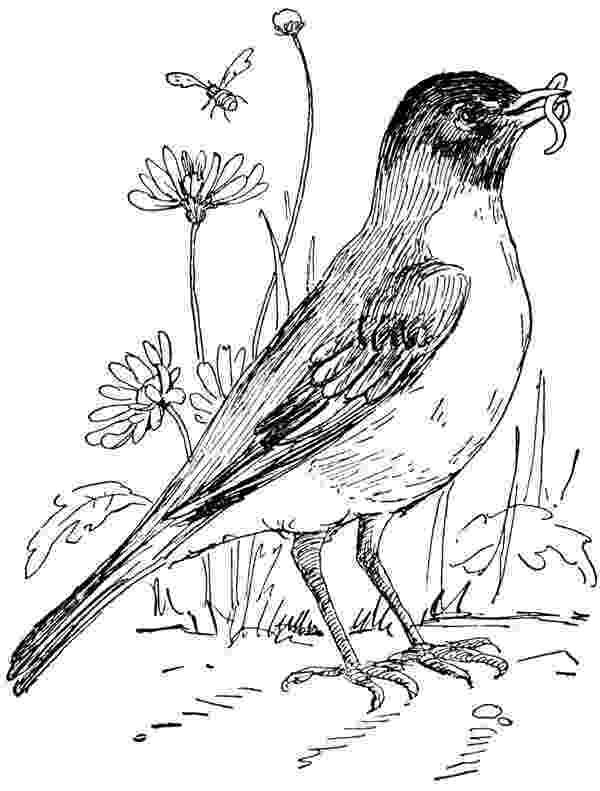 michigan state bird a look back magic and bird39s 1979 ncaa showdown at the state michigan bird