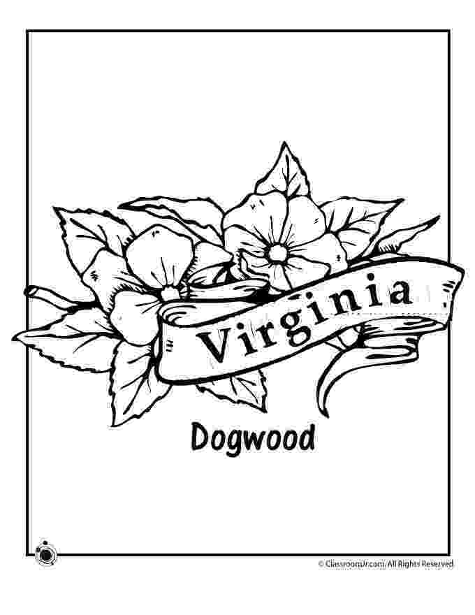 mississippi state flower mississippi coloring pages at getdrawingscom free for mississippi state flower