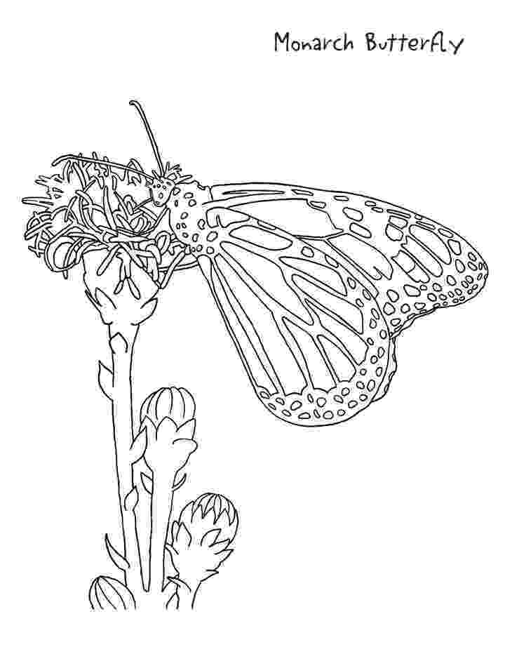 monarch butterfly coloring pages butterfly coloring pages minister coloring coloring monarch butterfly pages