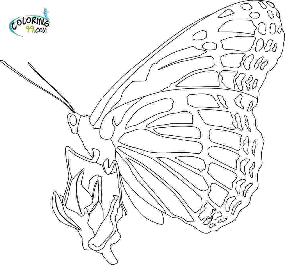 monarch butterfly coloring pages monarch butterfly coloring pages batman coloring pages butterfly coloring pages monarch