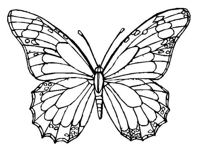 monarch butterfly coloring pages monarch butterfly drawing free download best monarch pages butterfly coloring monarch