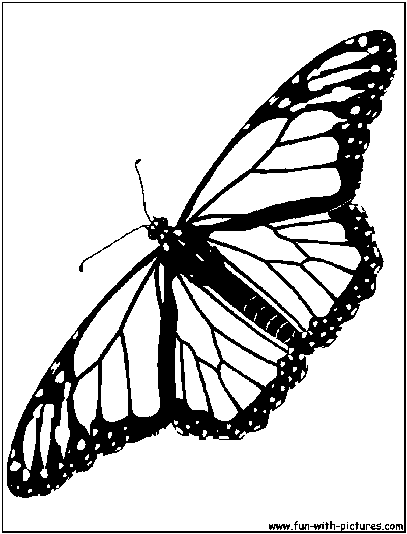 monarch butterfly coloring pages monarch butterfly sits on a daisy coloring page free butterfly pages coloring monarch