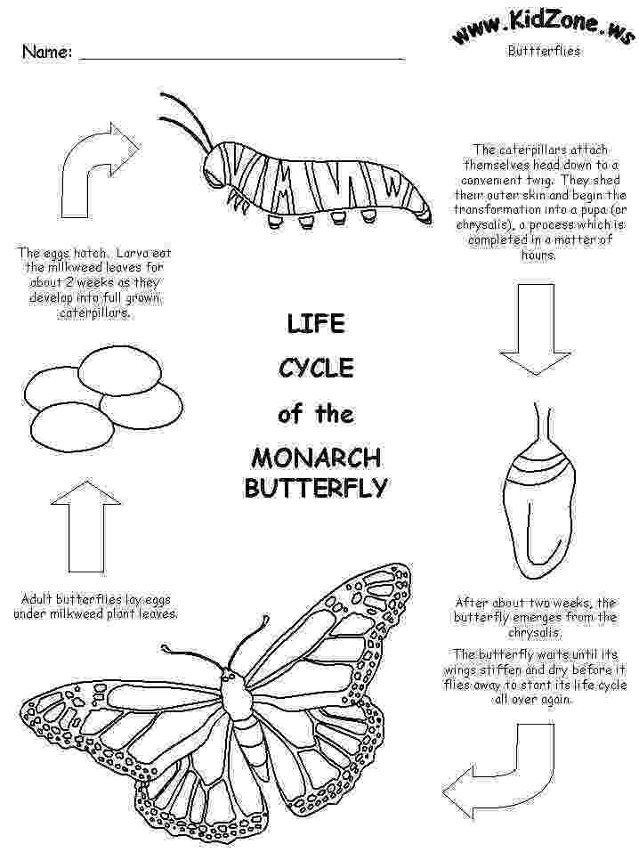 monarch butterfly life cycle coloring page 28 monarch butterfly life cycle coloring page butterfly coloring cycle page butterfly monarch life