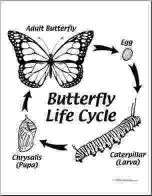monarch butterfly life cycle coloring page clip art butterfly life cycle coloring page i abcteach page butterfly cycle coloring monarch life
