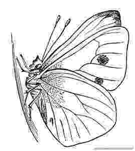 monarch butterfly life cycle coloring page coloring pages of the monarch life cycle life cycles cycle coloring butterfly life monarch page