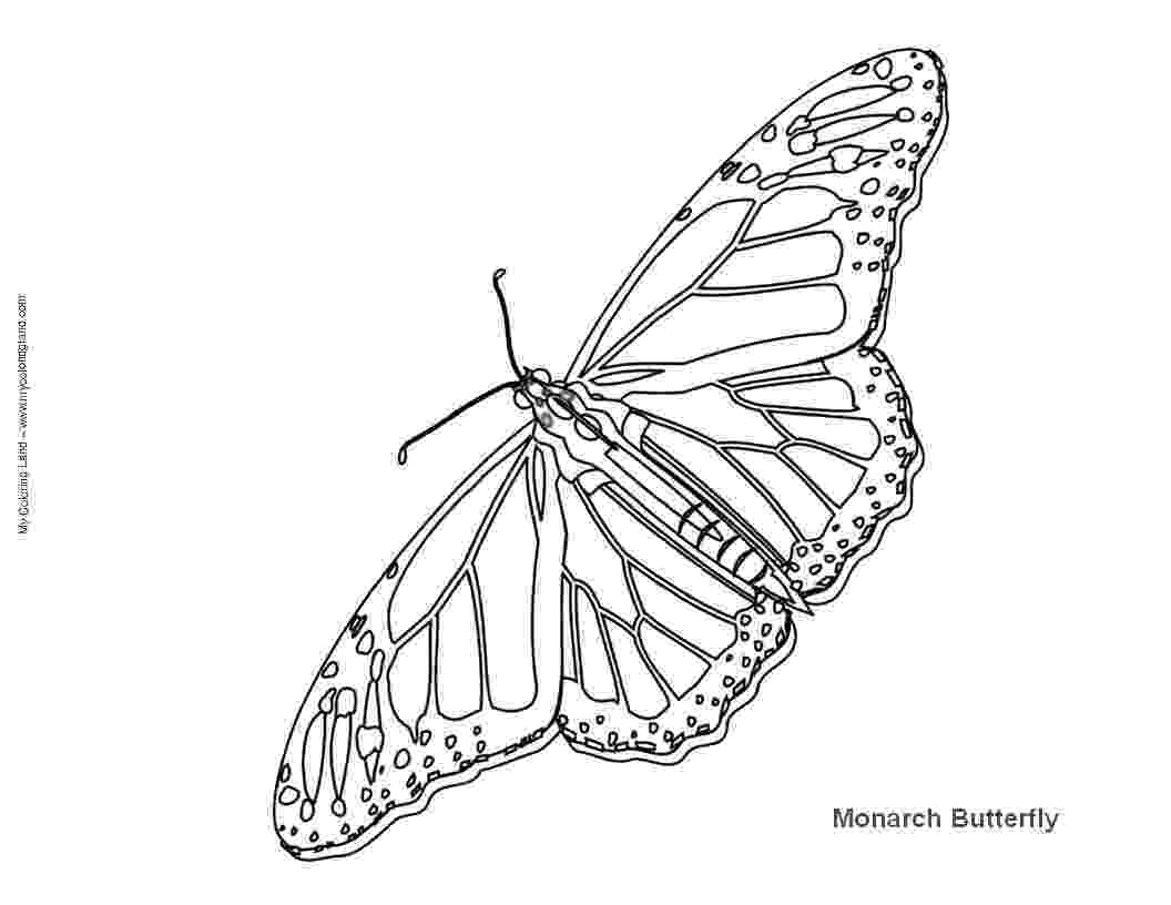 monarch butterfly life cycle coloring page free monarch butterfly and caterpillars coloring images butterfly life cycle page coloring monarch