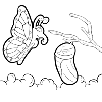 monarch butterfly life cycle coloring page free monarch butterfly and caterpillars coloring images monarch life page coloring butterfly cycle 1 1