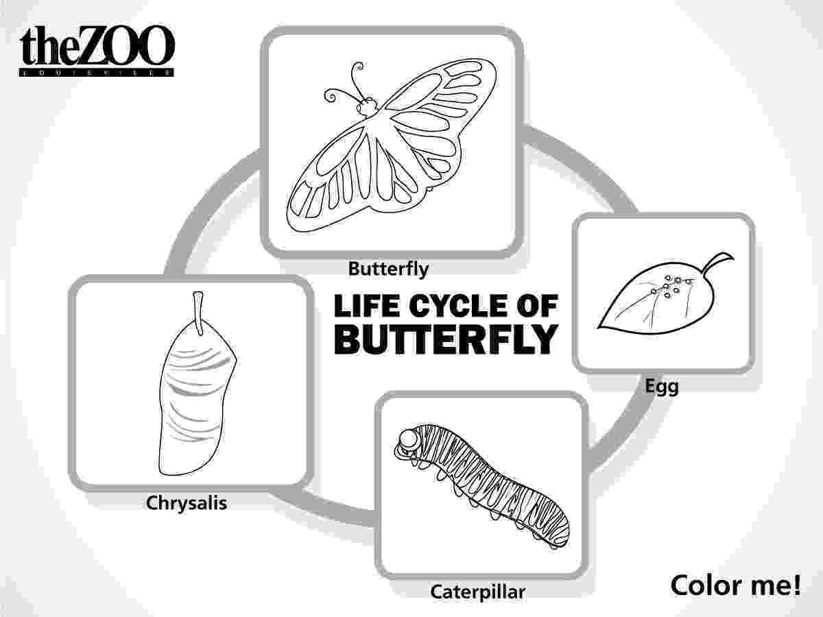 monarch butterfly life cycle coloring page louisville zoo butterfly cycle monarch life coloring page