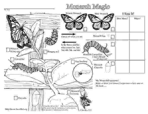monarch butterfly life cycle coloring page monarch magic coloring page monarch butterfly monarch monarch page coloring cycle life butterfly