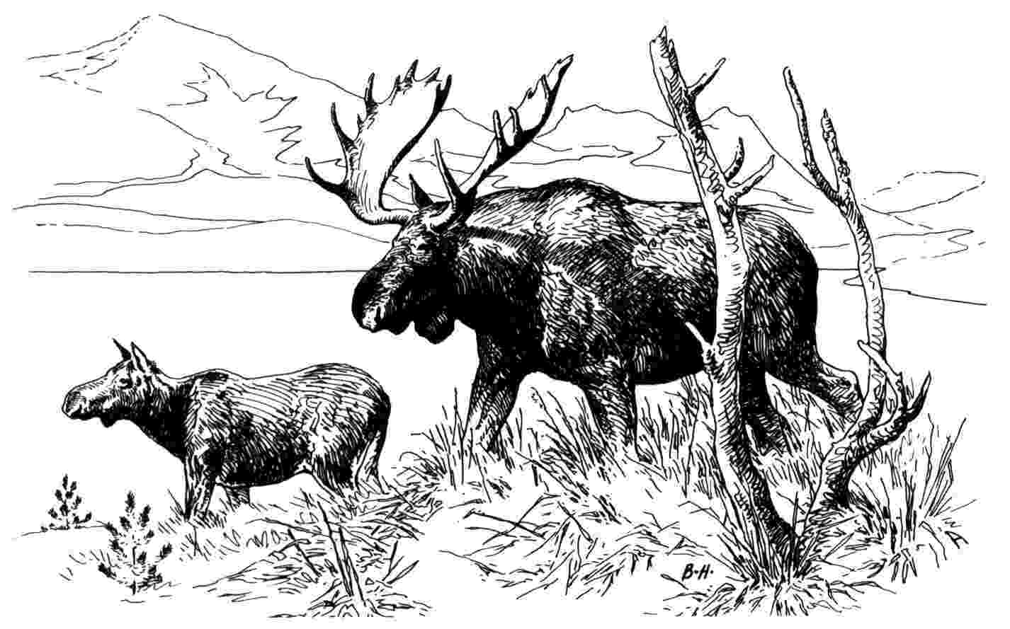 moose pictures to color moose coloring page 2 free printable coloring pages to moose pictures color