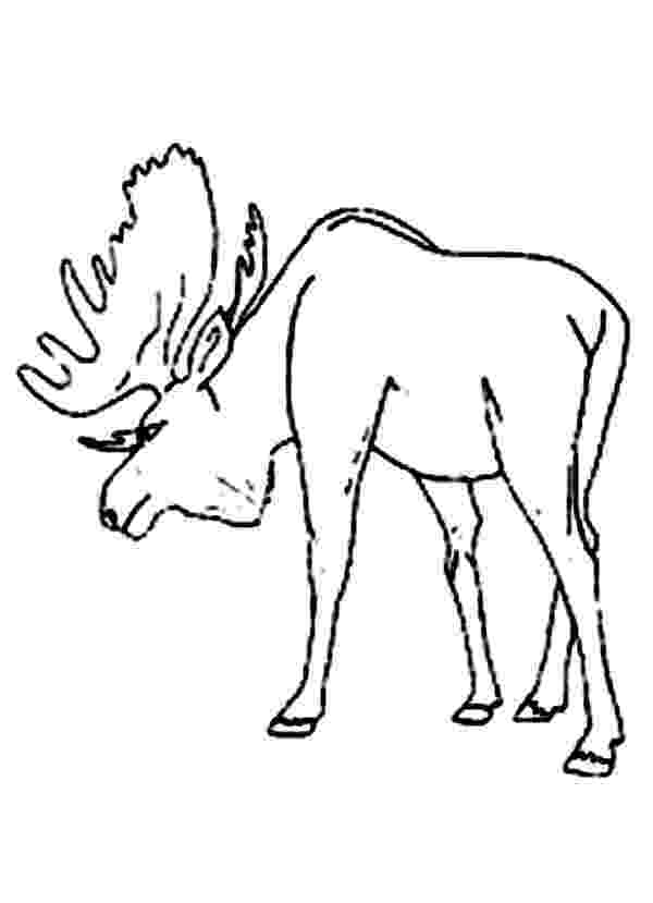 moose pictures to color moose coloring page moose color to pictures