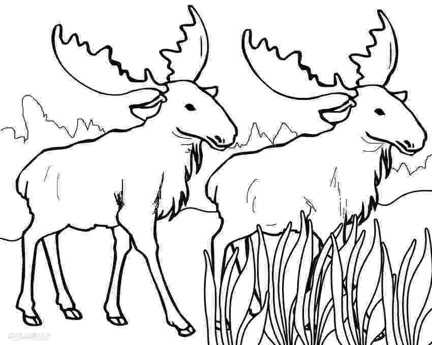 moose pictures to color moose coloring pages coloring pages to download and print moose color to pictures