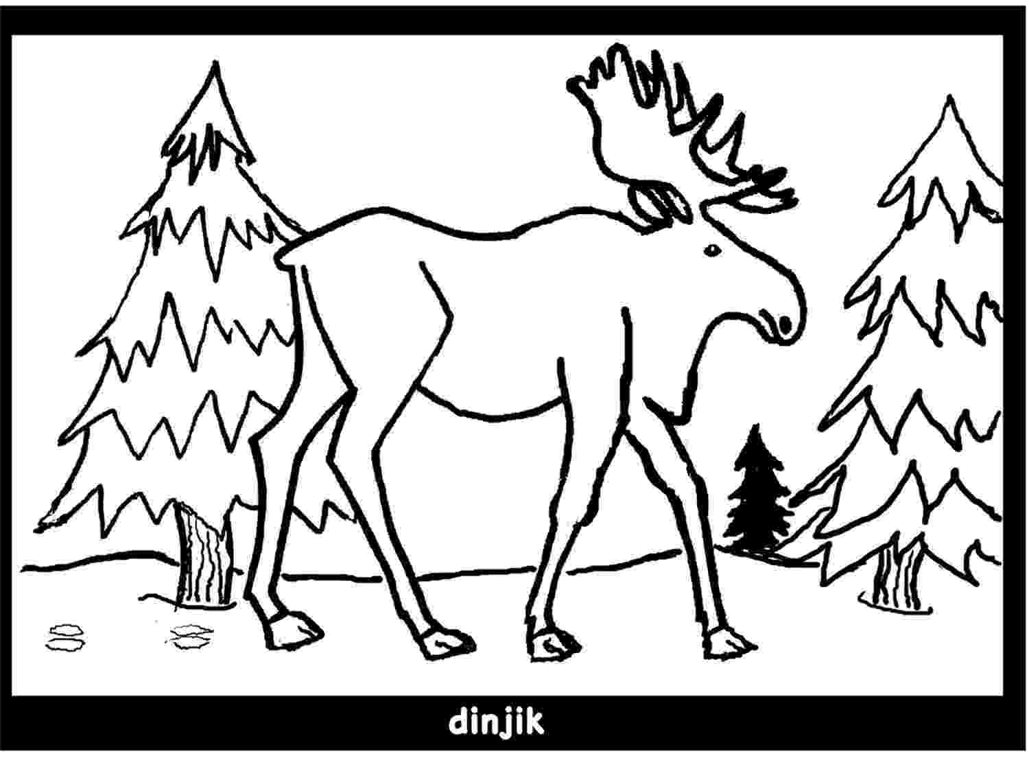 moose pictures to color printable moose coloring pages for kids cool2bkids to moose color pictures