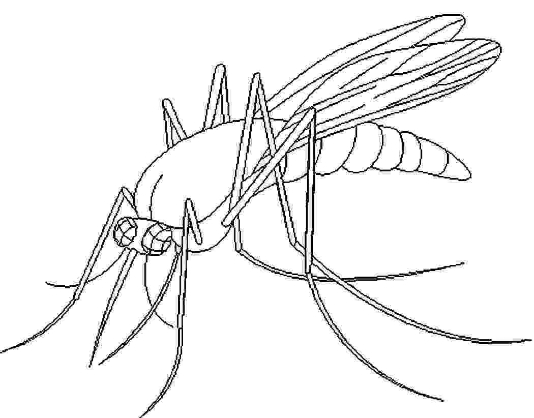 mosquito coloring page free printable mosquito coloring pages for kids coloring mosquito page