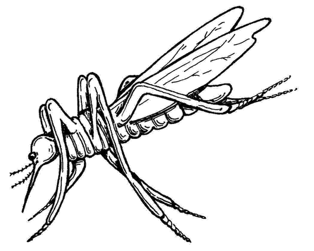 mosquito coloring page free printable mosquito coloring pages for kids mosquito page coloring