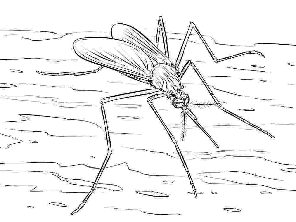 mosquito coloring page free printable mosquito coloring pages for kids page coloring mosquito
