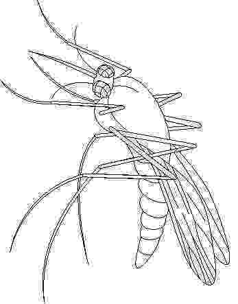 mosquito coloring page mosquito coloring pages coloring page mosquito