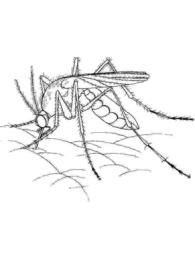 mosquito coloring page mosquito coloring pages page coloring mosquito