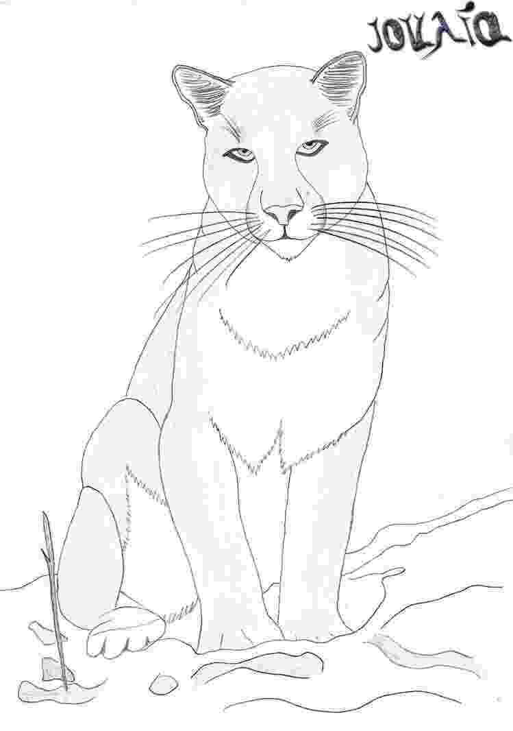 mountain lion coloring pages download mountain lion coloring for free designlooter mountain coloring pages lion