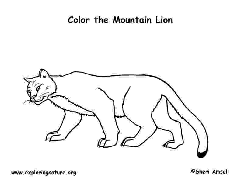 mountain lion coloring pages mountain lion coloring pages getcoloringpagescom pages lion mountain coloring