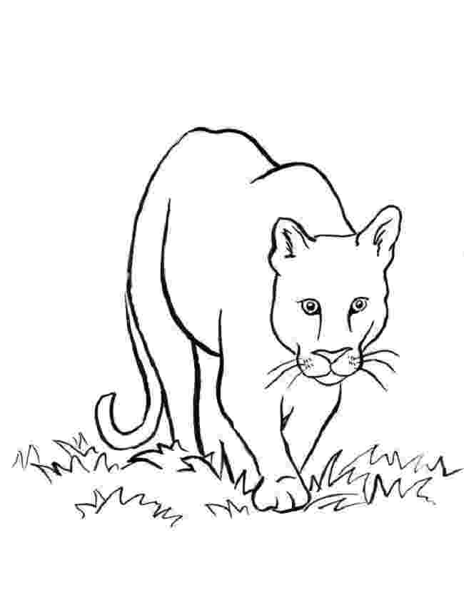 mountain lion coloring pages mountain lion coloring pages kidsuki coloring lion mountain pages